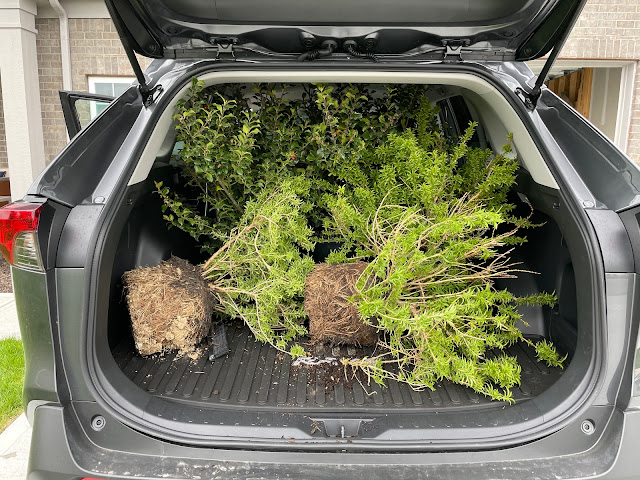 plants piled in back of SUV