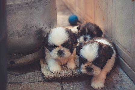 Most usable Indian Dogs name  - Suggested name for your