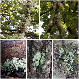 Collection of lichen photos from Tunbridge Wells Common