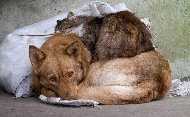 «Мама!» — мяукнул бездомный котенок и забрался на шею к большой доброй собаке