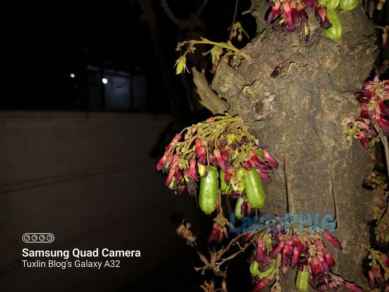 Hasil Foto Kamera Samsung Galaxy A32
