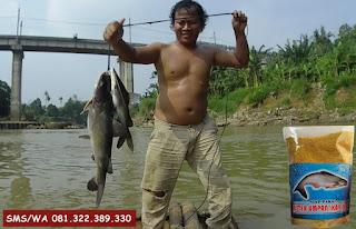Umpan Ikan Patin Khusus Di Danau Rawa Dan Situ