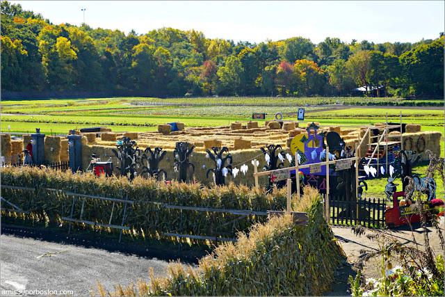 Laberinto en Wilson Farm, Lexington