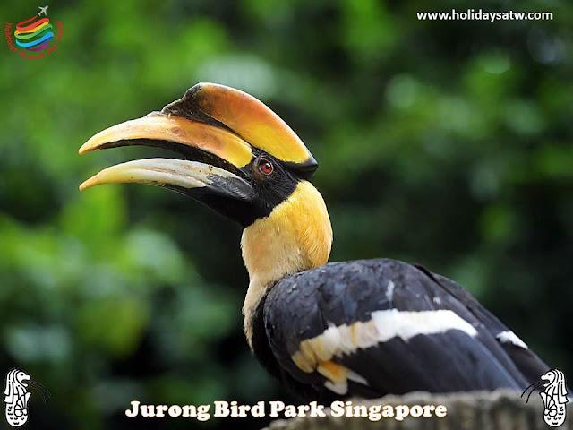 Activities to do in Jurong Bird Park, Singapore