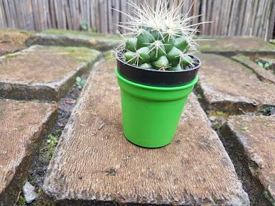 mini-saksije-sa-malim-kaktusima