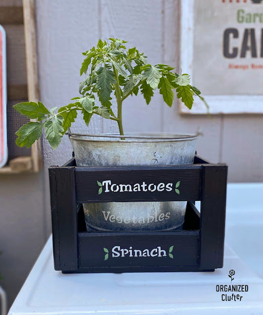 Photo of painted & stenciled crate with cherry tomato plant
