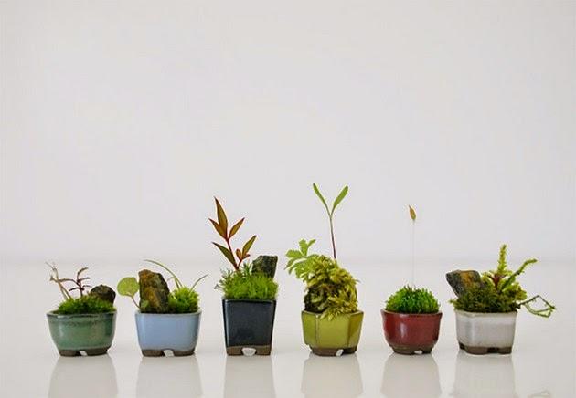 ultra-small bonsai