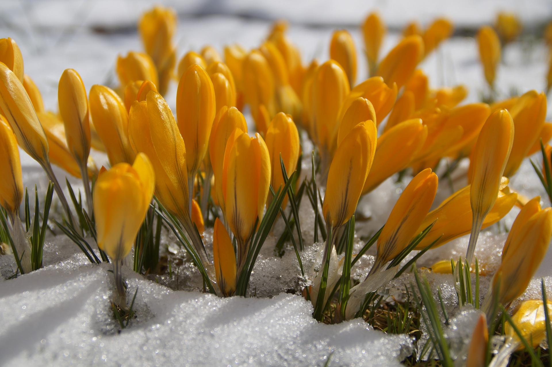 Plants Outdoors in Winter