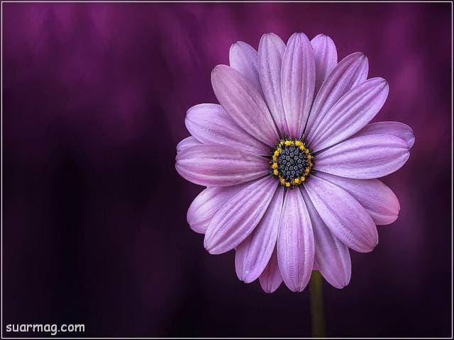 صور زهور 8 | Flowers Images 8