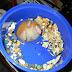 A maior coleção de fotos de bundas de Hamsters