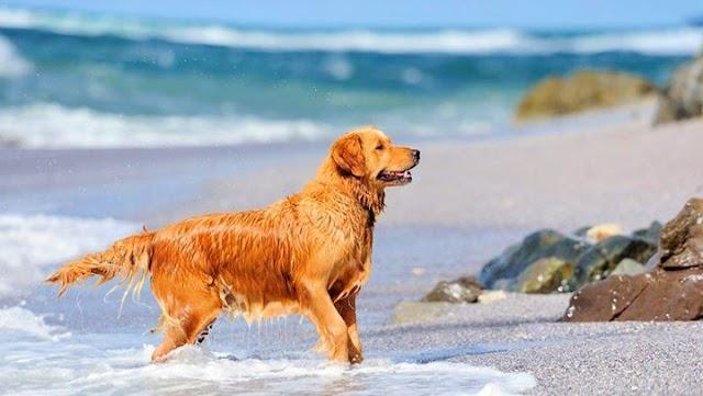 Αυτοί είναι οι κίνδυνοι της παραλίας για τους σκύλους σας