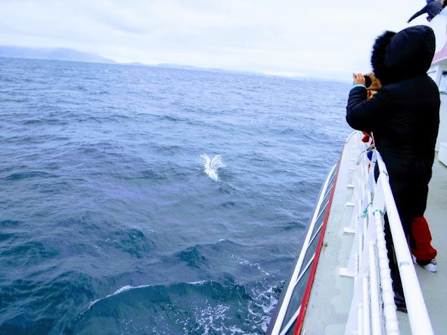 whale watching - Iceland - jo ebisujima - jojoebi