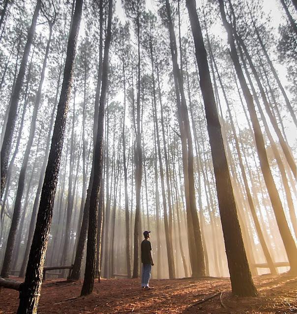 Lebaran 2019 Wisata Mangunan Siapkan Spot Foto Baru instagramable