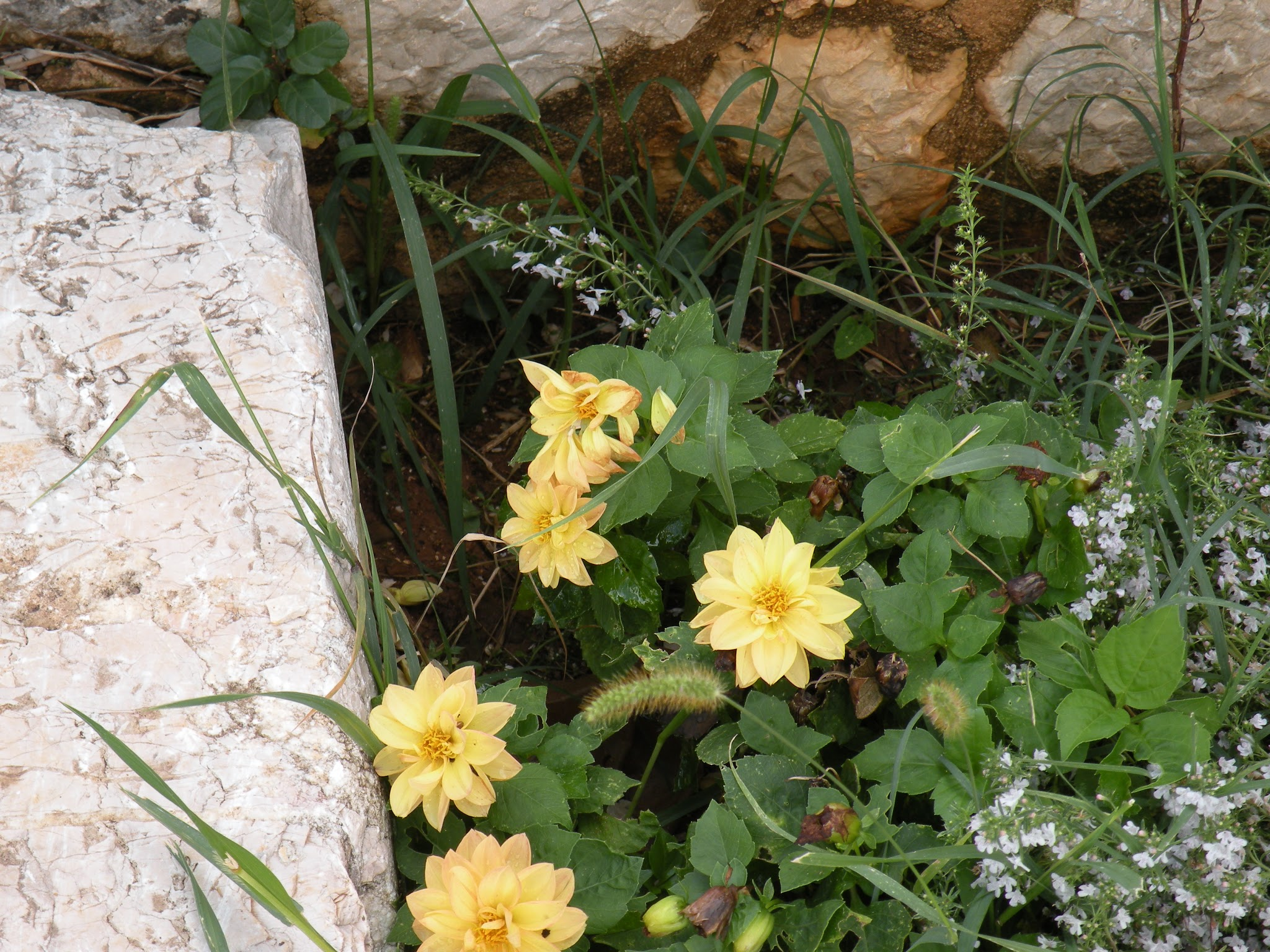 Slikovni rezultat za modaodaradosti flowers spring
