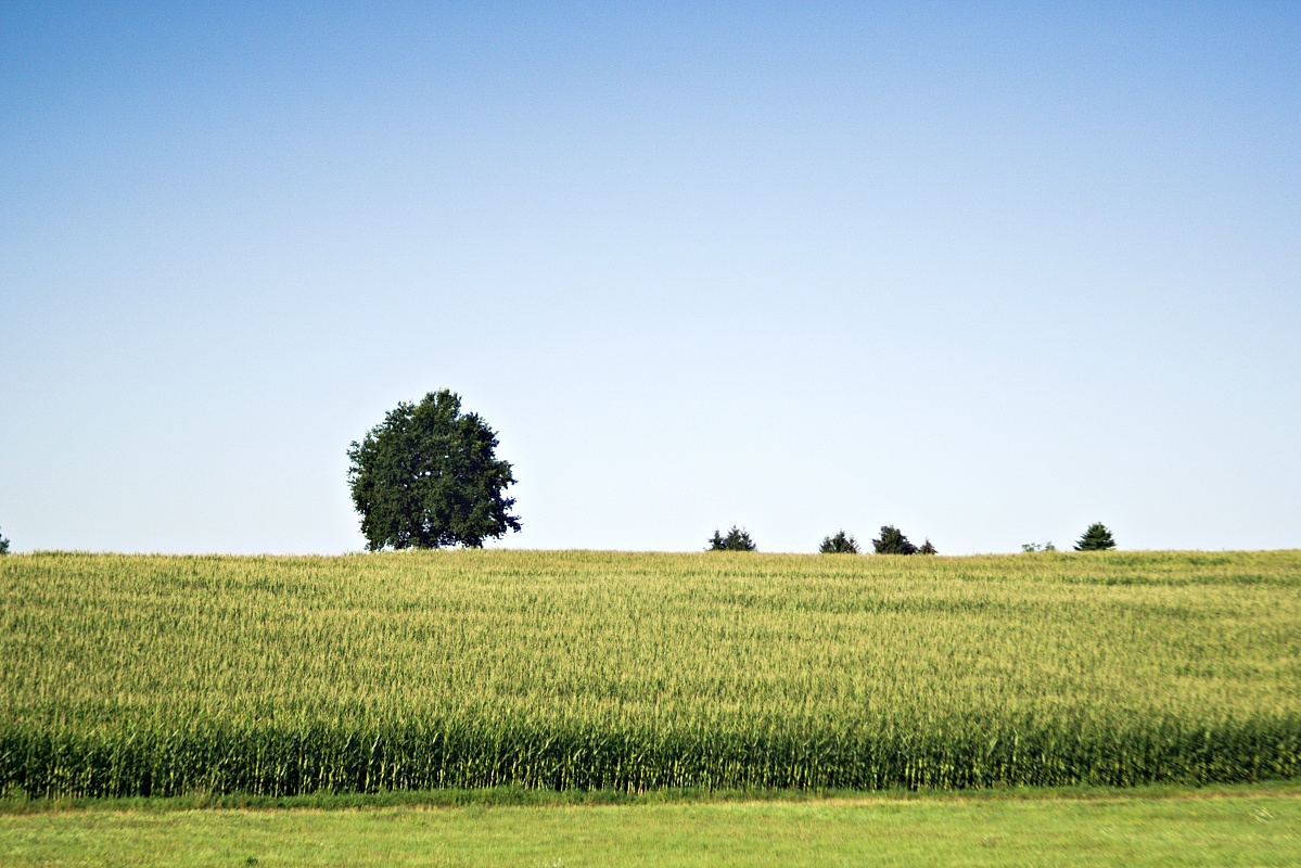 Einsam steht er da, der Baum
