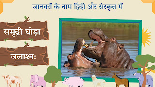 sea horse name in sanskrit and hindi with images