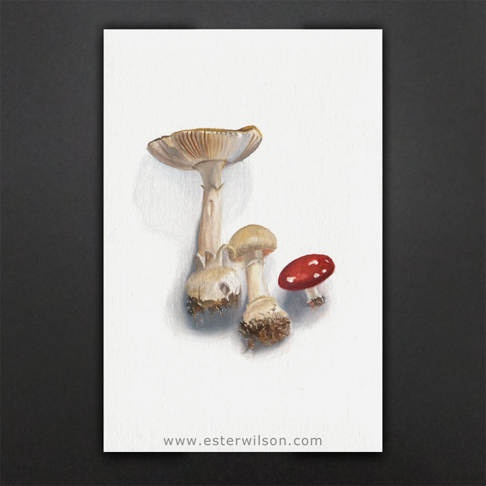 """Mushrooms"" - Oil painting on prepared paper, 4"" x 6"""