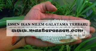 Essen Ikan Nilem Khusus Galatama
