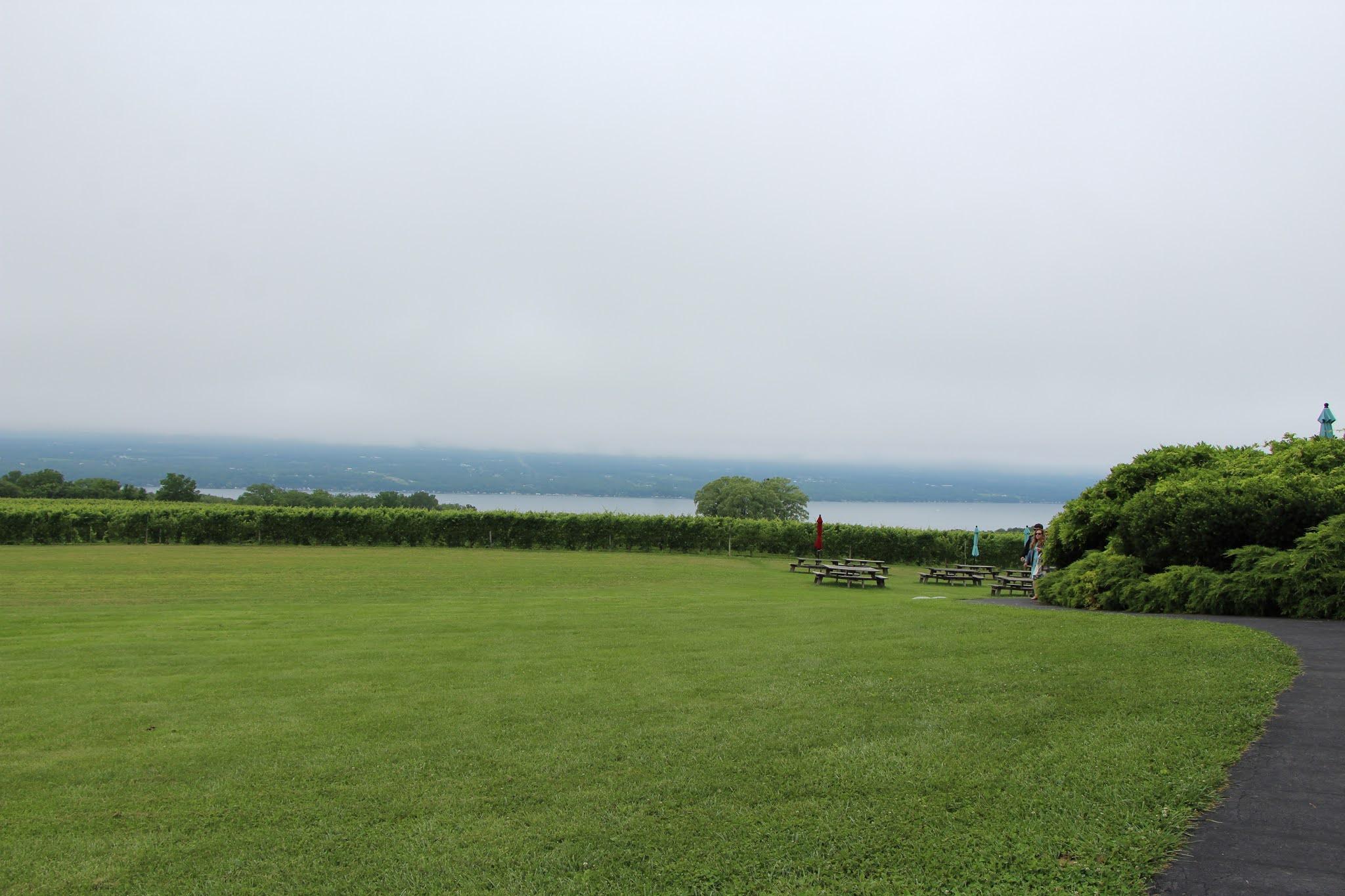 winery, wine tour, vineyard, finger lakes, upstate new york