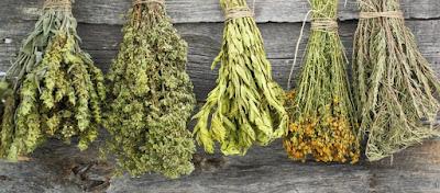 Ουρικό οξύ: Τα βότανα που το διαλύουν – Ποια είναι τα πιο αποτελεσματικά