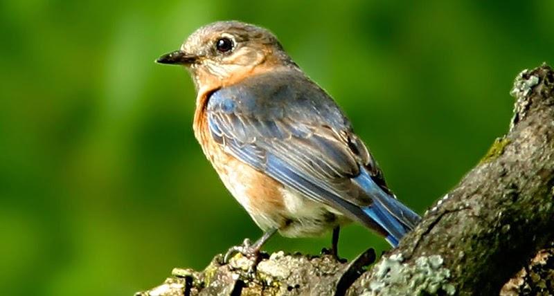 تصوير الطيور