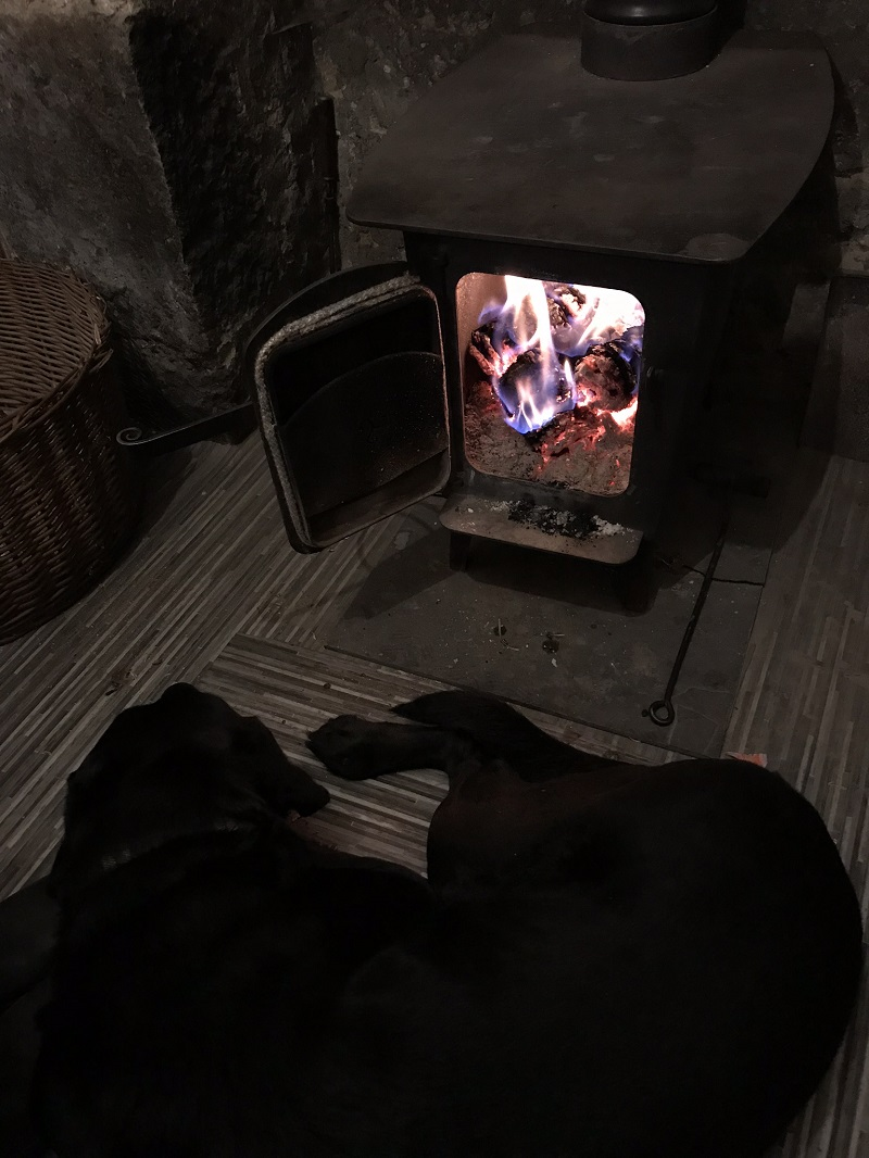 Black lab heating up in front of the stove