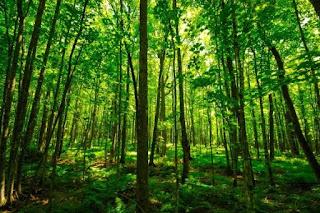 Potensi Sumber Daya Hutan Indonesia