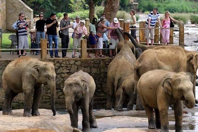 مركز رعاية الفيلة