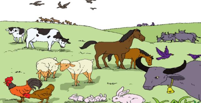 """Materi Kelas 3 SD/MI Bahasa Inggris """"Animal Growth"""""""