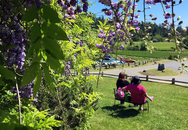 View from the Visitor Center at Pelindaba Lavender