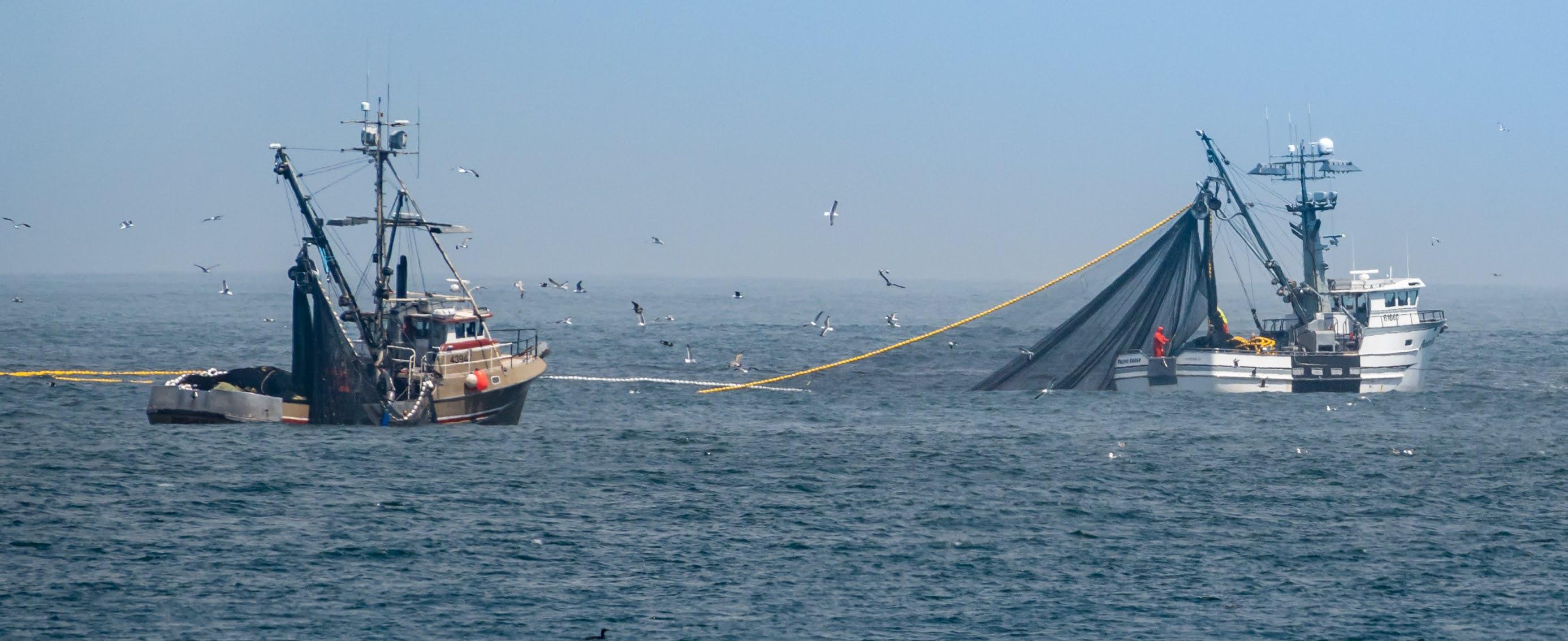 Investigadores publican un estudio sobre el impacto en la fauna marina en Galápagos tras el caso del barco Fu Yuan Yu Leng 999