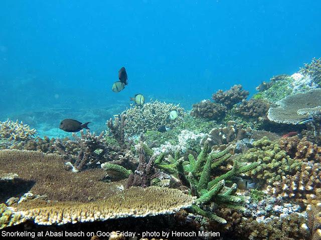 Terumbu karang di Papua Barat