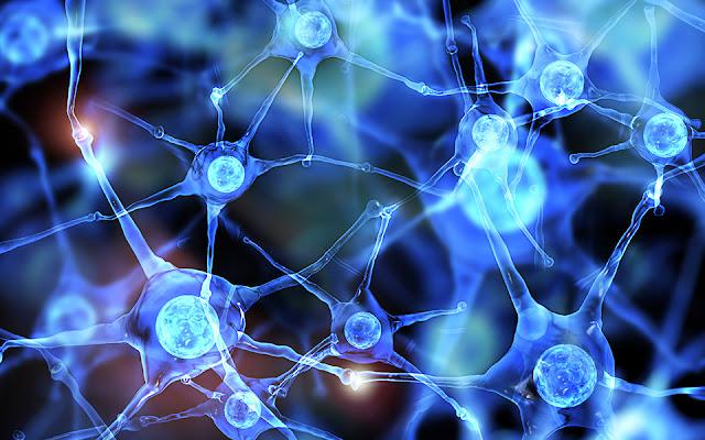Functional Neurology: Differences Between Dopamine and Serotonin | El Paso, TX Chiropractor
