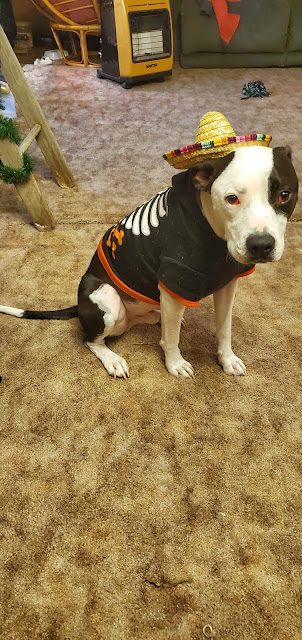 Pets in Halloween costumes