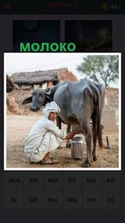 на улице мужчина доит корову в бидон с молоком