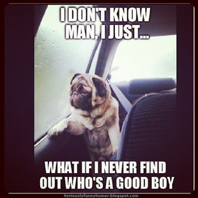 Dog - I don't know man, I just... What if I never find out who's a good boy?! :D
