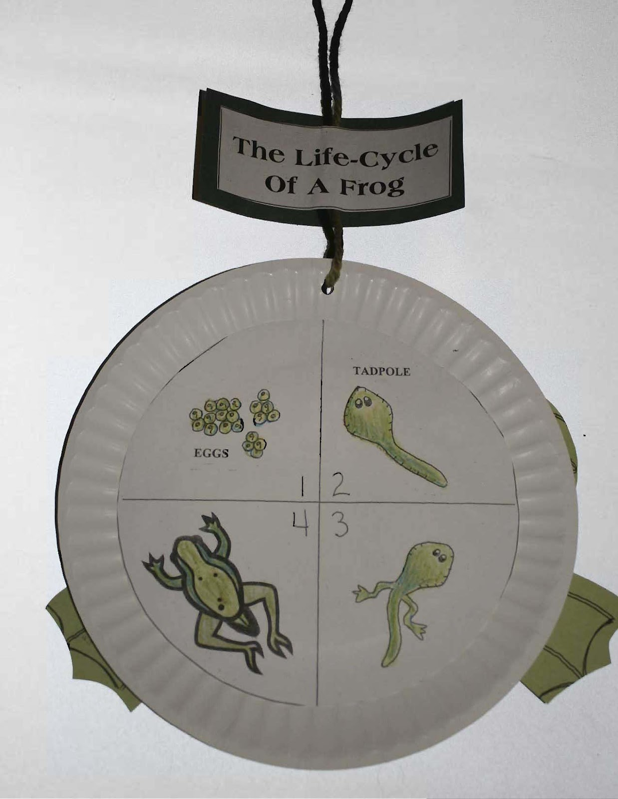 Frog Life Cycle Classroom Display Photo