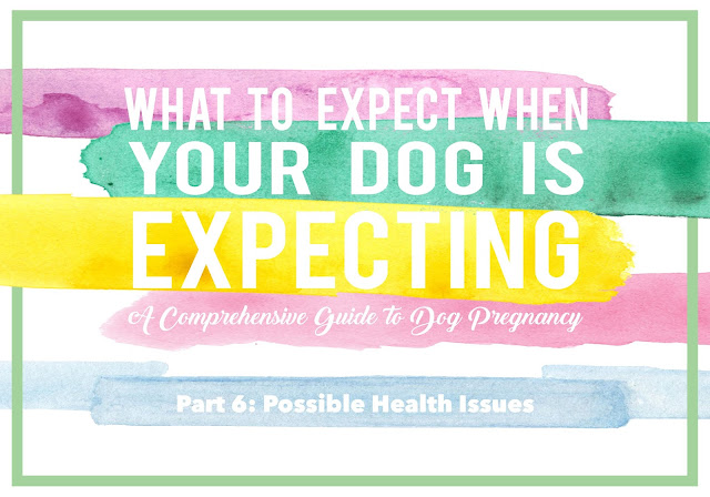 What to Expect When Your Dog is Expecting: Part 6 - Possible Health Issues