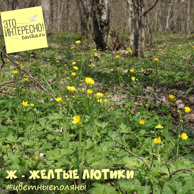 Лютик. Цветы Крыма