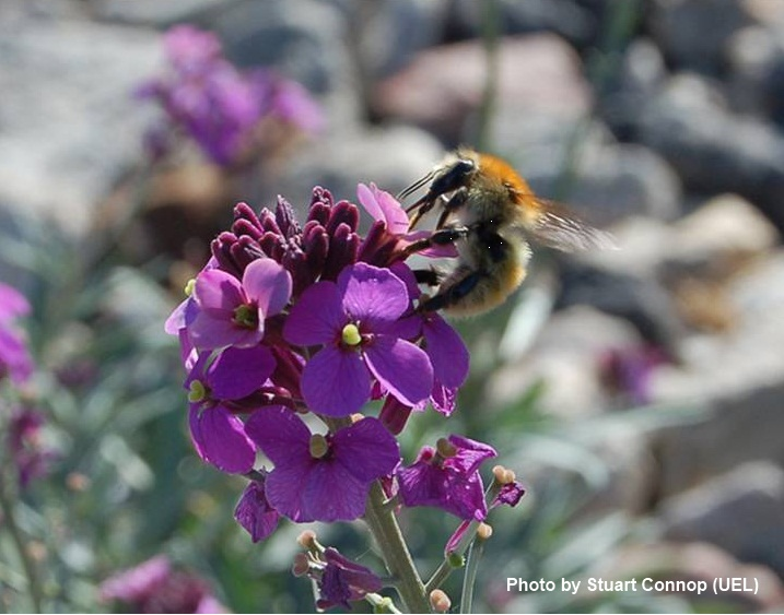 Barking Riverside Conservation: It's Buzzing Over At