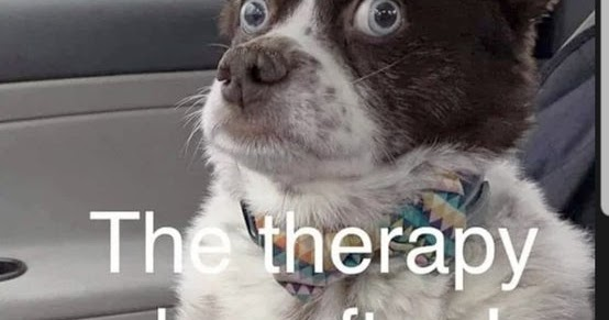 The Therapy Dog After I Share All My Problems