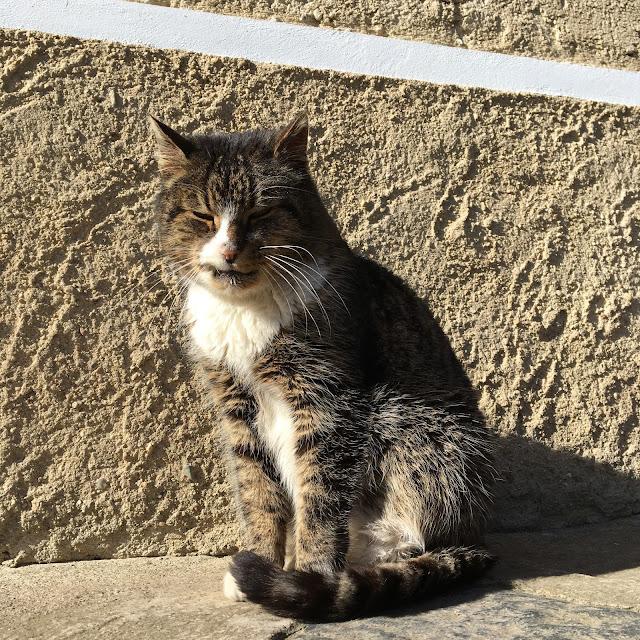 Naše kočka Bára se vyhřívá na prvním jarním slunci.