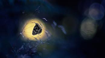 Butterfly, Animal, 4K, 3840x2160, #98