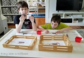 Parts of Arachnids Activities in Action
