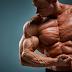 Best Muscles Building Foods For Bodybuilders.