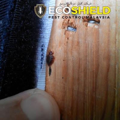 bed bugs control kuala lumpur pest control malaysia