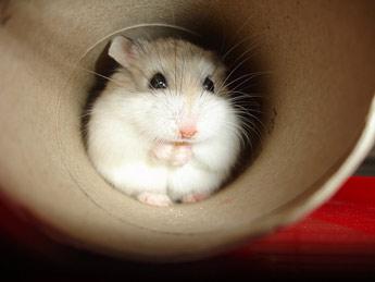 Hamster tube porn