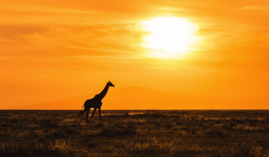 """""""Espera hasta que tu alma te alcance"""": Un precioso relato africano con una una gran enseñanza para la vida"""