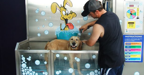CrossRoads Hand Car Wash: Dog Wash Station