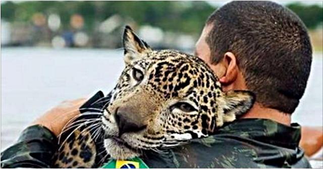 Утопающий ягуар обнял своего спасителя, будто домашний кот…